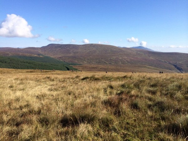 Over worse ground, few tricky clues in a forest, fell over lots on a bog but the big man did a great job with the map.